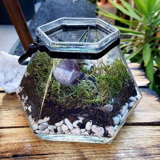 Hexagonal crystal and succulent terrarium