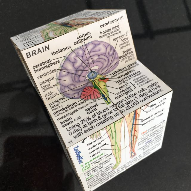 Folding Cube Human Anatomy, Toys & Games, Others on Carousell