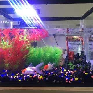 Aquarium(complete set)