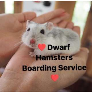 🐹Dwarf Hamsters Boarding Service 🐹 - $3/day/tank
