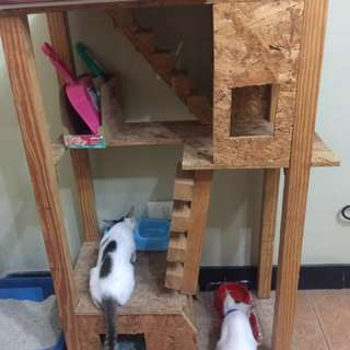 Cat Condo Unit Less 50% Off Until Sept. 30!