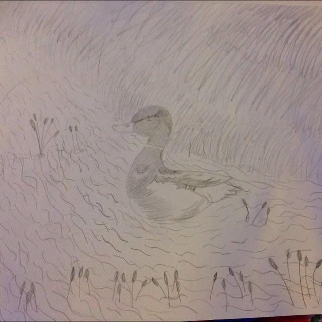 Duck Sketch