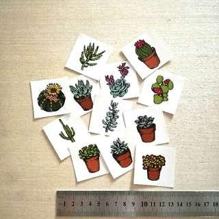 Cactus Succulent Stickers (All)