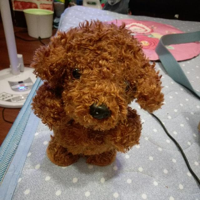 回聲玩具熊含郵降價
