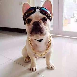 寵物 狗狗 貓咪 巴哥 法鬥 土豪 嘻哈 金項鍊 金鍊子@台北地下街