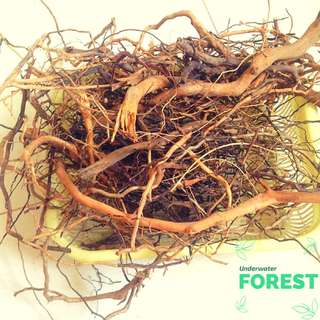 Tropical Mangrove Wood - for biotope, natural scape (LIMITED ON HAND)