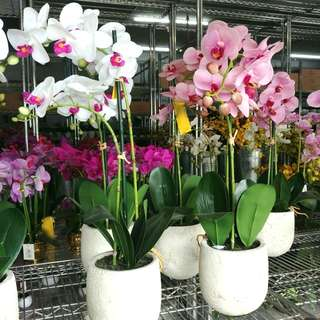Artificial Orchids in Pot