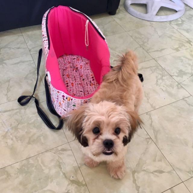 SALE!!! Pet Carrying Bag