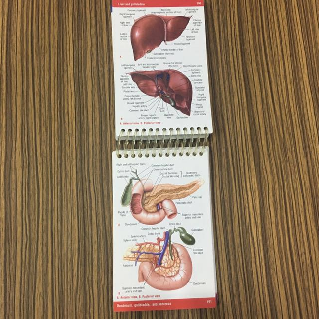 pocket anatomy physiology shirley a jones textbooks on carousell rh ph carousell com Anatomy and Physiology Worksheets Human Anatomy