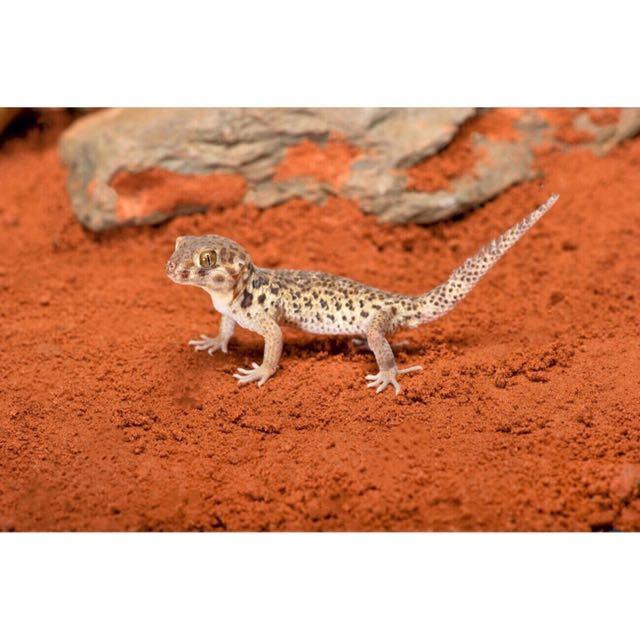Exo Terra Desert Sand Desert Terrarium Subtrate Pet Supplies On