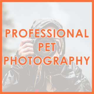 Professional Pet Photography