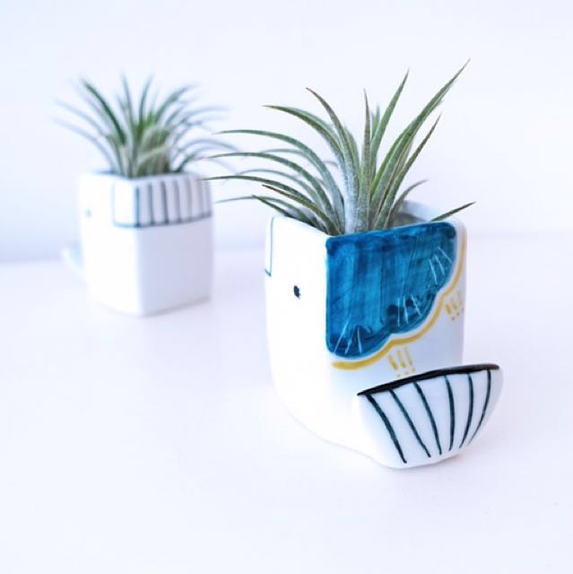 Mix: Whale planter with air plant and pebbles