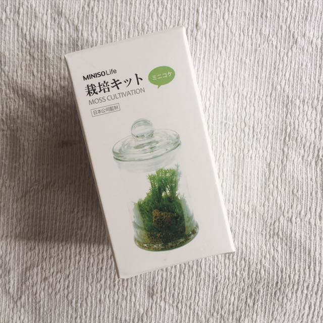 Miniso Moss Cultivation