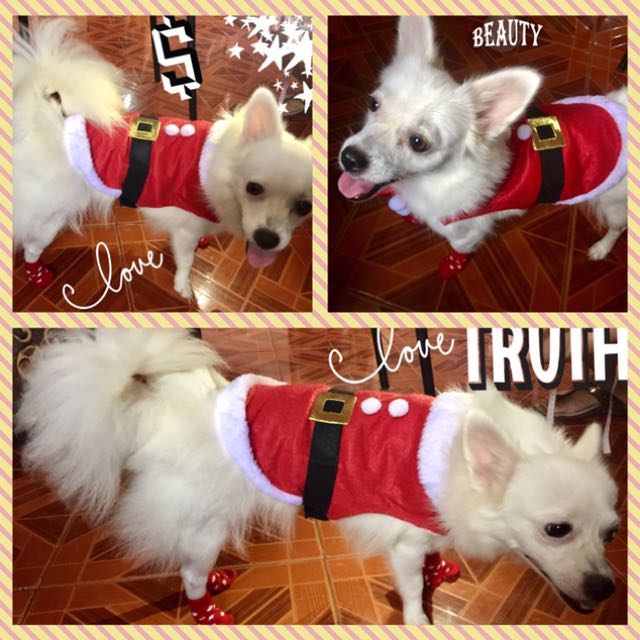 Santa Clause Costume for dogs or cats dress