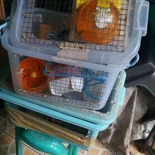 Assorted Hamster Accessories
