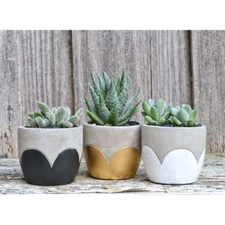 Concrete Scalloped Petals Planter