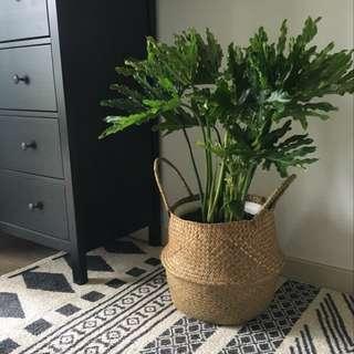 💐YourStalkMarket - Rattan flower pot plant holder