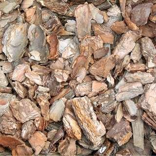 Pine wood chip