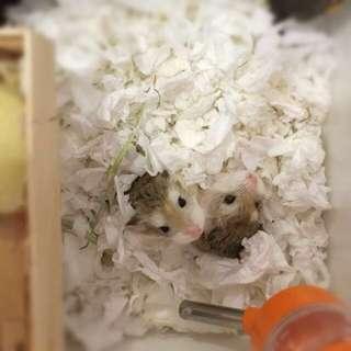 Hamster boarding 🐹