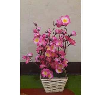 Bunga Sakura dan Pot Rotan