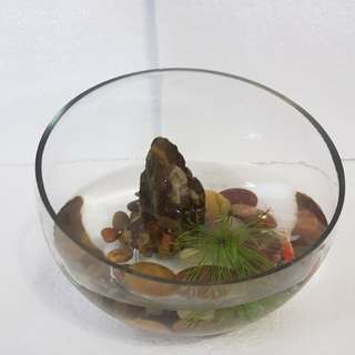 Snail shape glass bowl set for micro shrimp or betta fish.
