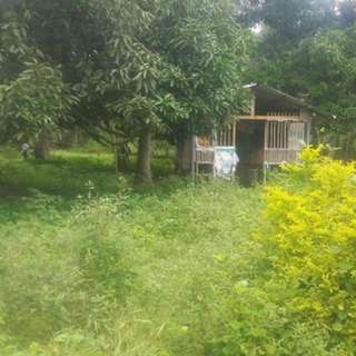 For Sale Calaca Batangas 2 hectares