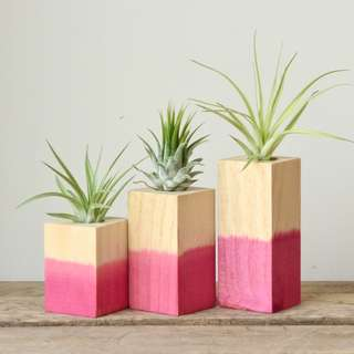 Set of Three Dipped Pink Wooden Air Plant Tillandsia Holder
