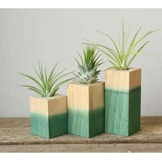 Set of Three Dipped Green Wooden Air Plant Tillandsia Holder