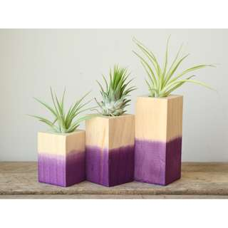Set of Three Dipped Purple Wooden Air Plant Holder Air Plant Display Tillandsia Holder