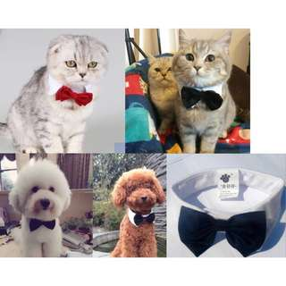 NEW bow tie for pet dog cat kitten puppy collar