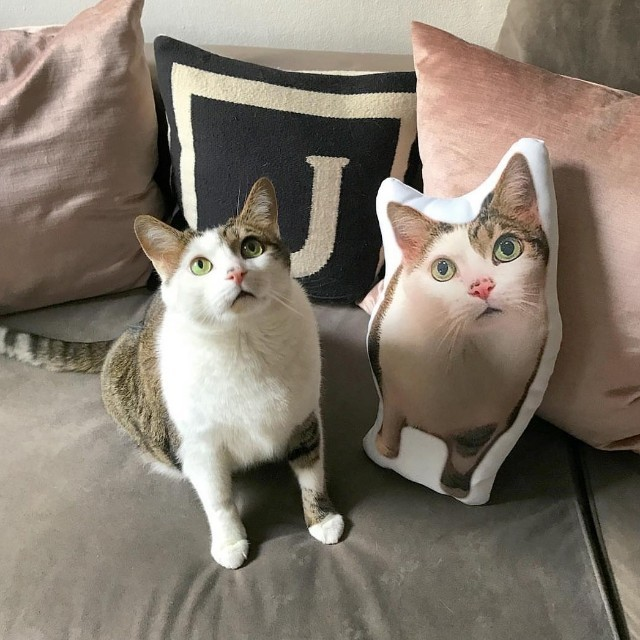 CUSTOM PILLOW BASED ON YOUR PET PHOTO!