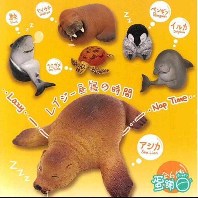 動物zoo 海豚