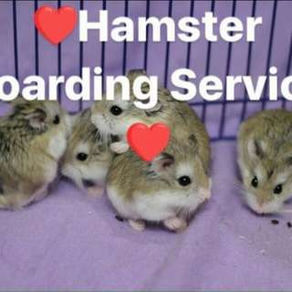 🐹 Hamster/ Fancy Mice  Boarding 🐹 - $3/day/tank