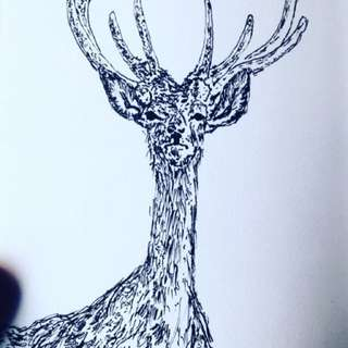 Red Deer Original Ink Sketch