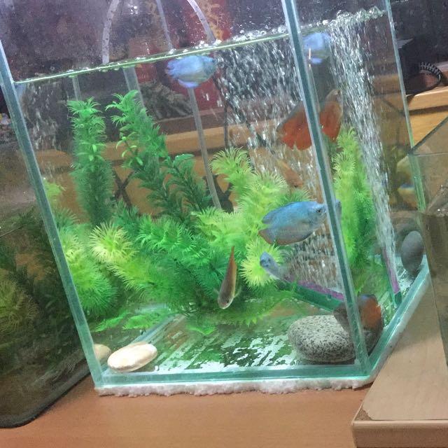tall fish tank on carousell