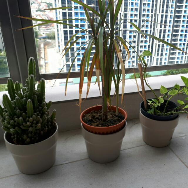 3 plants with Ikea pots