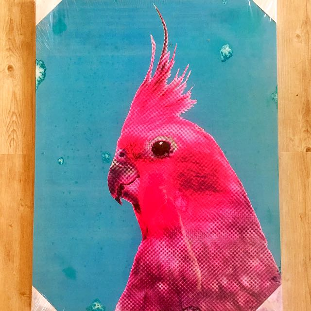 Cockatiel Canvas Wall Picture NEW
