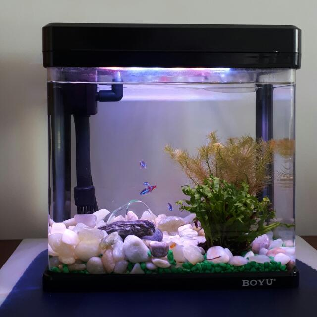 Fishtank and accessories