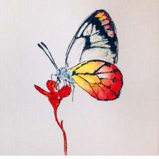 Painted Jezebel Butterfly Watercolour