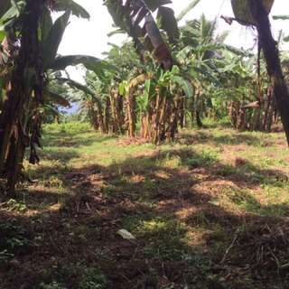 12-hectare lot for SALE in Magallanes, Cavite