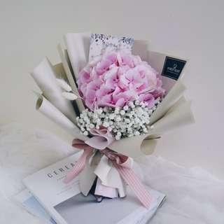 Dream a Little Dreamer (Soft Pink Holland Hydrangea)