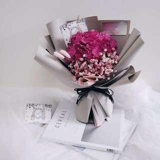 Dream a Little Dreamer (Holland Pink Hydrangea)