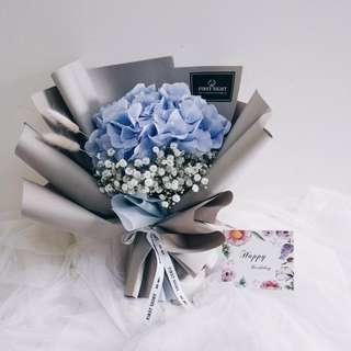 Dream a Little Dreamer (Holland Blue Hydrangea)