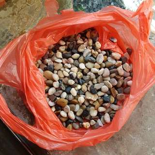 Pebbles/ Rocks