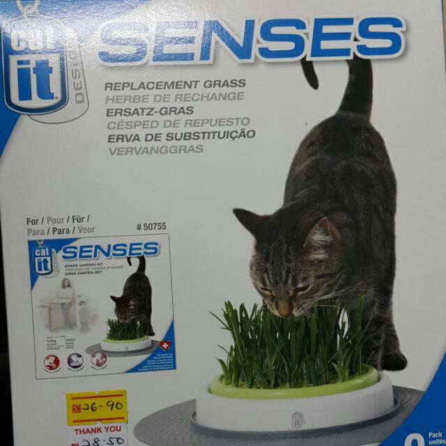 Grass Garden Kit