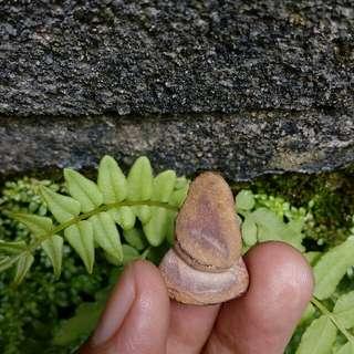 Batu Petir Sumatra