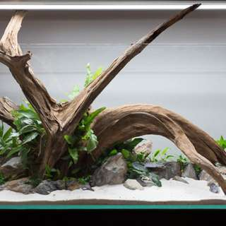 Looking for big drift wood 5-6fts lengths