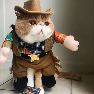 Cowboy costume for small dog or cat.