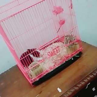 kandang kelinci hamster marmut
