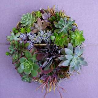 Succulent plant arrangement - 20cm pot